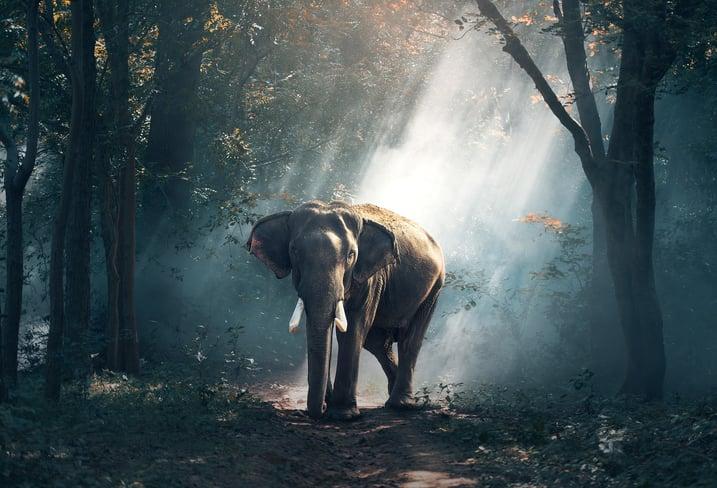 big picture thinking, elephant